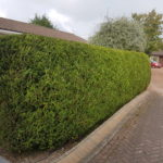 Hedge cutting south lanarkshire